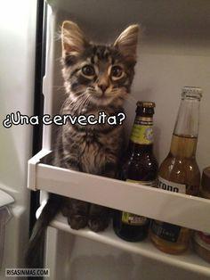¿Una cervecita?