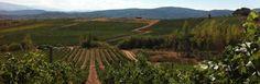 Bodega Casar de Burbia ∼ Spanien - DO Bierzo - http://weinblog.belvini.de/bodega-casar-de-burbia