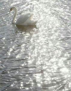 My Talktalk Webmail >> 61 Best Swan Lake images | Swan lake, Swan, Ballet beautiful