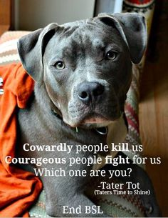 Cowardly people kill pits! Pit lover here!!! My pits are my babies!!!