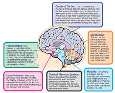 Illustration of the brain showing its parts and functions