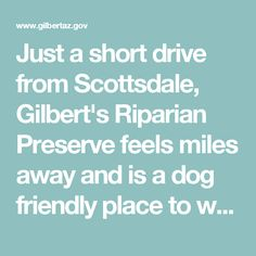 Just a short drive from Scottsdale, Gilbert's Riparian Preserve feels miles away and is a dog friendly place to walk your dog. See Birds, fish, and tons of bunnies!