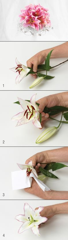Removing pollen for clean, beautiful lily arrangements