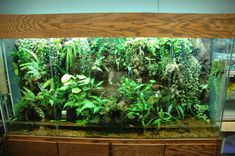 outstanding vivariums by members of this site