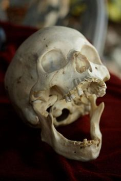 Skull Reference, Human Reference, Figure Reference, Anatomy Reference, Skeleton Muscles, Skeleton Bones, Skull And Bones, Skull Anatomy, Human Anatomy