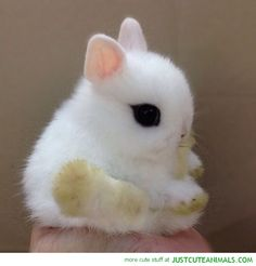 Is it me or is this the most cutest bunny ever