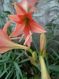 Gardening, Flowers, Plants, Garten, Flora, Plant, Lawn And Garden, Royal Icing Flowers, Flower