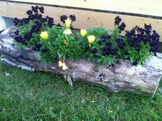 Log planters! Cute, natural, biodegradable, looks great in just about any garden! How could you go wrong?