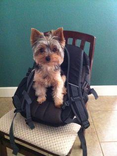 Can I go with you?  I'll fit in your backpack