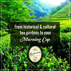 With prominence of tea in the Chinese culture, China has been a cultural heart of tea plantation for the longest time. From the mesmerizing tea gardens of China, comes our wide variety of delicious #organic teas. #RadhikasFineTeas