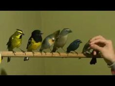 Aves se alimentando na mão - YouTube