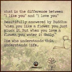 """What is the difference between """"I LIKE you"""" and """"I LOVE you."""" Beautiful answer by Buddha: 'When you like a flower, you just pluck it. But when you love a flower, you water it daily."""" One who understands this understands life.--"""