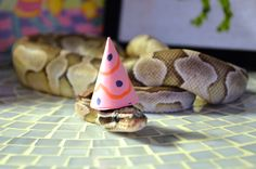 5 Snakes You Need To Avoid In Life