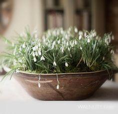 Ikebana, Little Flowers, Wild Flowers, Bonsai, Fresh Farmhouse, Lily Of The Valley, Farm Life, Garden Pots, Indoor Garden
