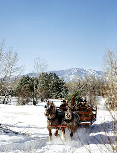 perfect! sleigh ride, Christmas tree, and a ski mountain in the background... [Christmas Time in the City]