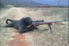 monkeys. they have guns now.