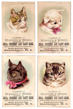 vintage cat trading cards for Warren & Wood, importers of china, crockery and fa. vintage cat trading cards for Warren & Wood, importers of china, crockery and fancy goods. Vintage Ephemera, Vintage Cards, Vintage Postcards, Vintage Images, I Love Cats, Crazy Cats, Cool Cats, Image Chat, Gatos Cats