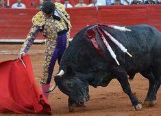 Notiferias Toros en Venezuela y el Mundo: Morante de la Puebla cuaja su mejor faena en Méxic...