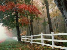Fall on the farm!