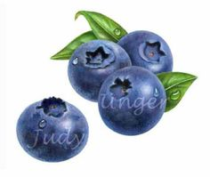 Blueberry Group by Judy Unger