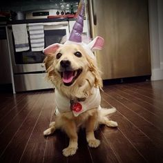 Whoever said that magic isn't real hasn't seen this unicorn. | 27 Little Dogs To Help Get You Through The Week