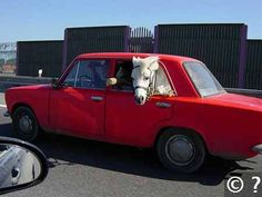 Wer zahlt? Pferde- oder KFZ-Haftpflichtversicherung?