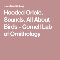 Hooded Oriole, Sounds, All About Birds - Cornell Lab of Ornithology
