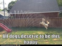 All dogs deserve to be happy