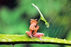 Funny pictures about A Little Frog Under His Umbrella. Oh, and cool pics about A Little Frog Under His Umbrella. Also, A Little Frog Under His Umbrella photos. Baby Animals, Funny Animals, Cute Animals, Animal Fun, Nature Animals, Wild Animals, Beautiful Creatures, Animals Beautiful, Beautiful Things
