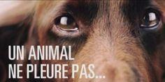 "France, awareness campaign via Media. Goal: responsible pet owners. France holds the ""record of animal euthanasia""  Responsabiliser les propriétaires d'animaux via les médias"