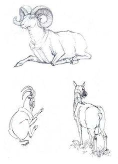 наброски животных карандашом - Поиск в Google