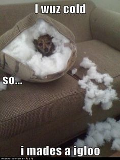This is something my grandog Lilly would do:)