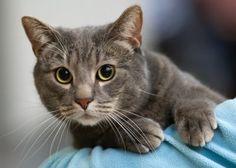 Μια γάτα κατάφερε να σώσει τη ζωή ενός βρέφους το οποίο είχε εγκαταλειφθεί κοντά σε έναν κάδο απορριμμάτων μιας πολυκατοικίας της Μόσχας.  Η γάτα προστάτευσε το μωρό από το κρύο, μέχρι...