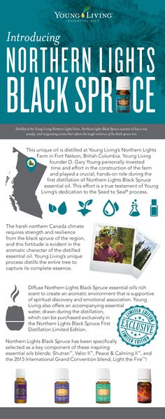 Young Living Essential Oils:  Northern Lights Black Spruce | For more information and to order yours, visit:  WWW.THESAVVYOILER.COM