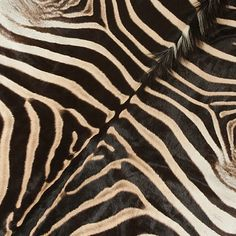 African Gameskin Group (Pty)Ltd Animal Print Rug, Exotic, African, Game, Detail, Venison, Games, Gaming, Toy