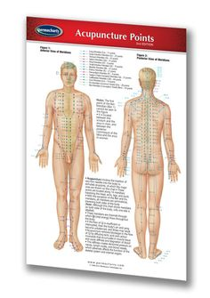 This laminated pocket sized quick reference chart vividly depicts the body's meridians from anterior, posterior, and lateral views, as well as a lateral view of the head's meridians.
