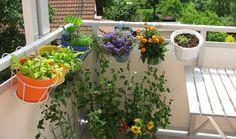 Come coltivare l'orto in casa - Leggi tutti i nostri consigli utili per coltivare direttamente sul balcone di casa pomodori, melanzane, zucchine, menta e frutta e tanti altri prodotti a km zero .
