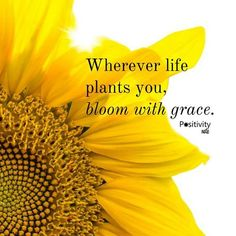 Wherever life plants you, bloom with grace...