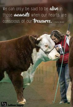 Cow Quotes, Farm Quotes, Country Girl Quotes, Animal Quotes, Country Life, Life Quotes, Show Steers, Show Cows, Pig Showing
