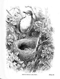 bird nest clipart.html