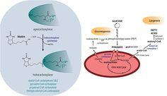 biotin_multiple_sclerosis_md1003_medday