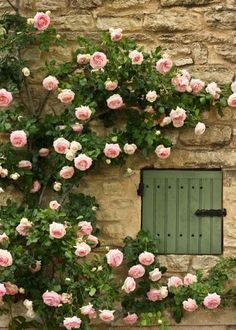Climbing Roses in Provenza Beautiful Roses, Beautiful Gardens, Gardens Of The World, Climbing Roses, Rose Cottage, Garden Gates, Dream Garden, Garden Inspiration, Garden Landscaping