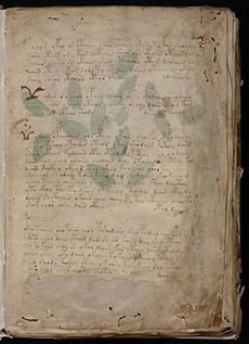 Voynich Manuscript (3).jpg