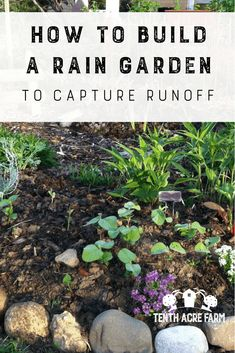 Learn how to build a rain garden that captures rainwater runoff from hard surfaces such as a roof or pavement for irrigation or to reduce water pollution Diy Herb Garden, Garden Plants, Veg Garden, Garden Fun, Garden Types, Organic Gardening, Gardening Tips, Vegetable Gardening, Veggie Gardens
