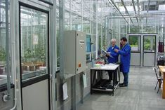 Glasshouse Structure Research & Study Research Studies, Glass House, Study, Greenhouses, Schools, Flexibility, Bridge, Safety, Commercial