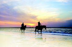 49 Best Amelia & Beyond images | Amelia, Fernandina beach