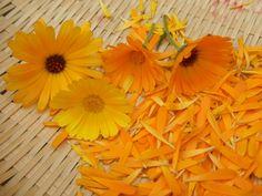キヨミのガーデニングブログ-オレンジ・イエローガーデンの画像