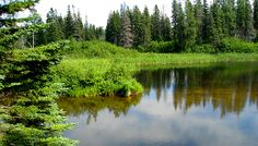 Northern Ontario! For more on this area! http://www.gypsynester.com/ontario.htm