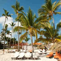 Palm Beach Punta Cana All inclusive Resort. This hotspot is a great getaway for you and the family. Family Vacation Destinations, Vacation Deals, Vacation Packages, Travel Destinations, Family Vacations, Travel Tours, Travel Deals, White Sand Beach, Palm Beach