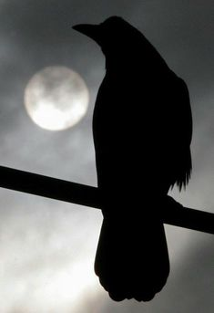 Raven or crow in the moonlight - silhouette Quoth The Raven, Photo Animaliere, Raven Art, Jackdaw, Crows Ravens, Stars And Moon, Beautiful Birds, Dark Art, Moonlight
